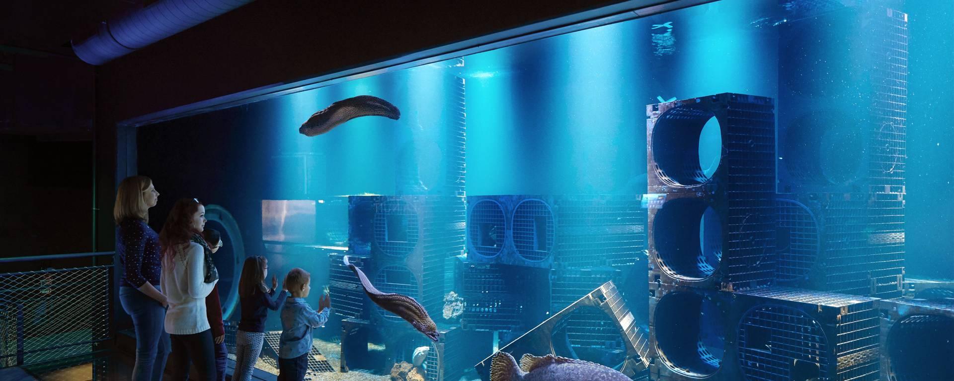 Aquarium mérous ©J. Alexandre