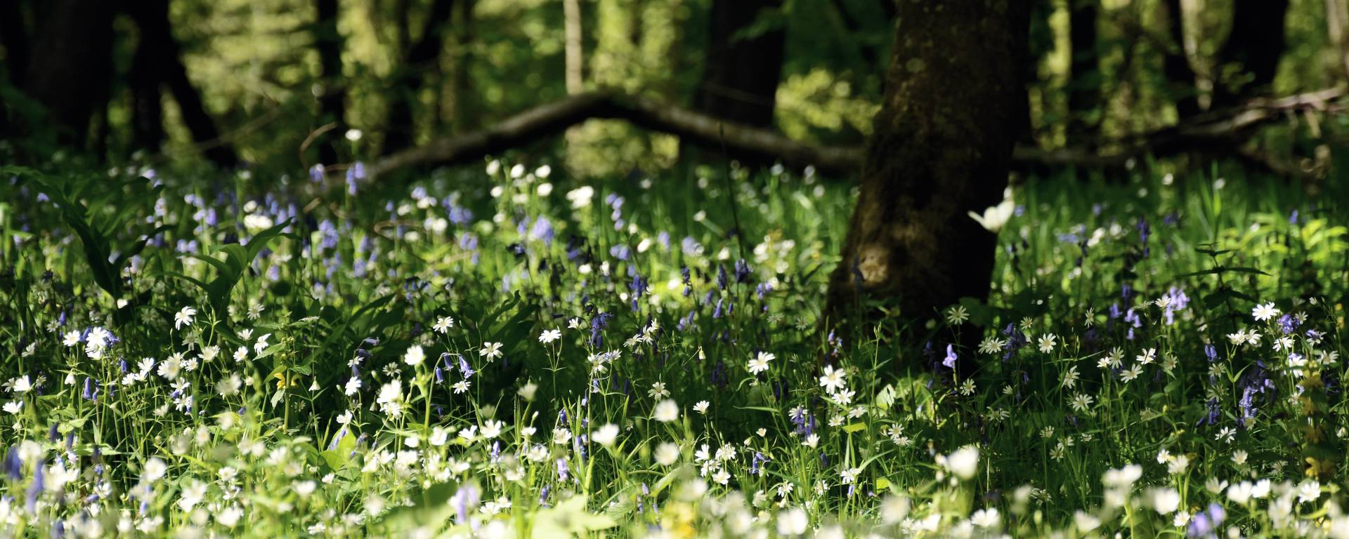 Forest of Hardelot
