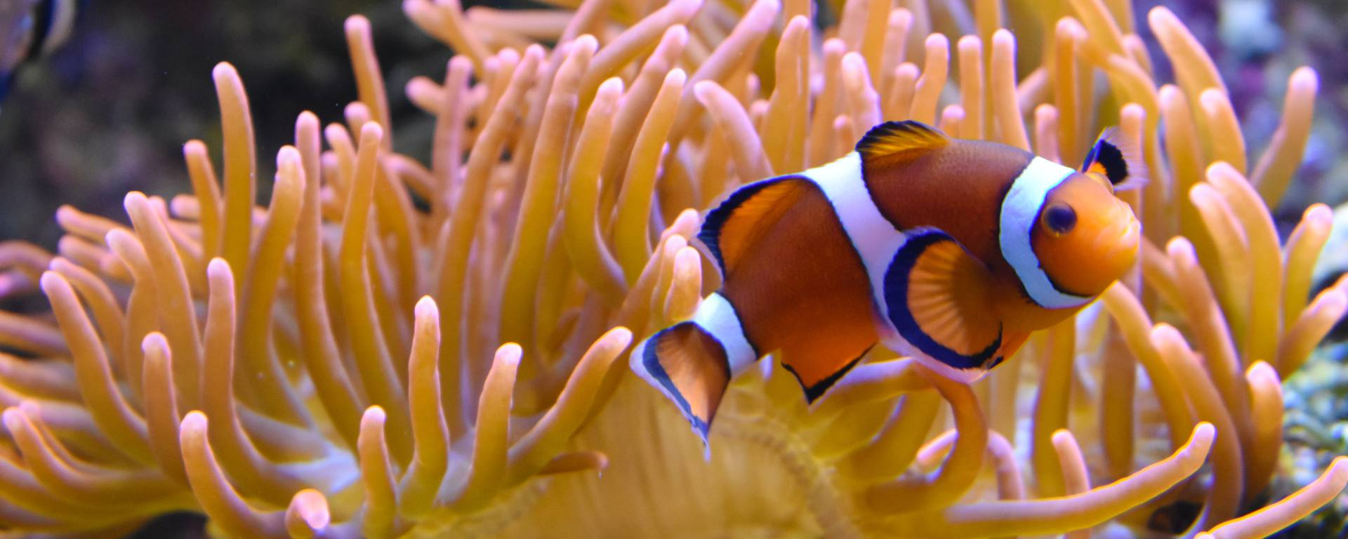 anemone_©Louise Merlier