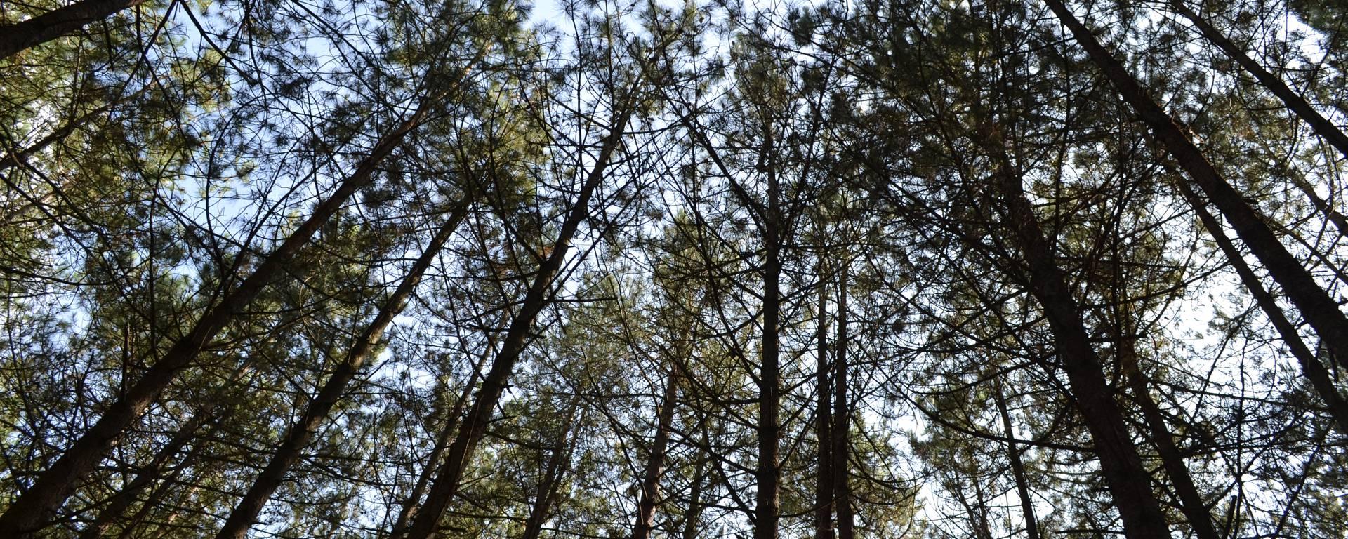 Cimes des arbres du Mont Saint-Frieux