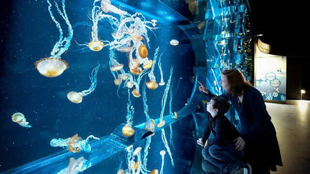 Aquarium_méduses par ©J-Alexandre