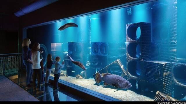 Aquarium Mérous public ©J Alexandre