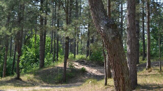 Forêt d'Ecault