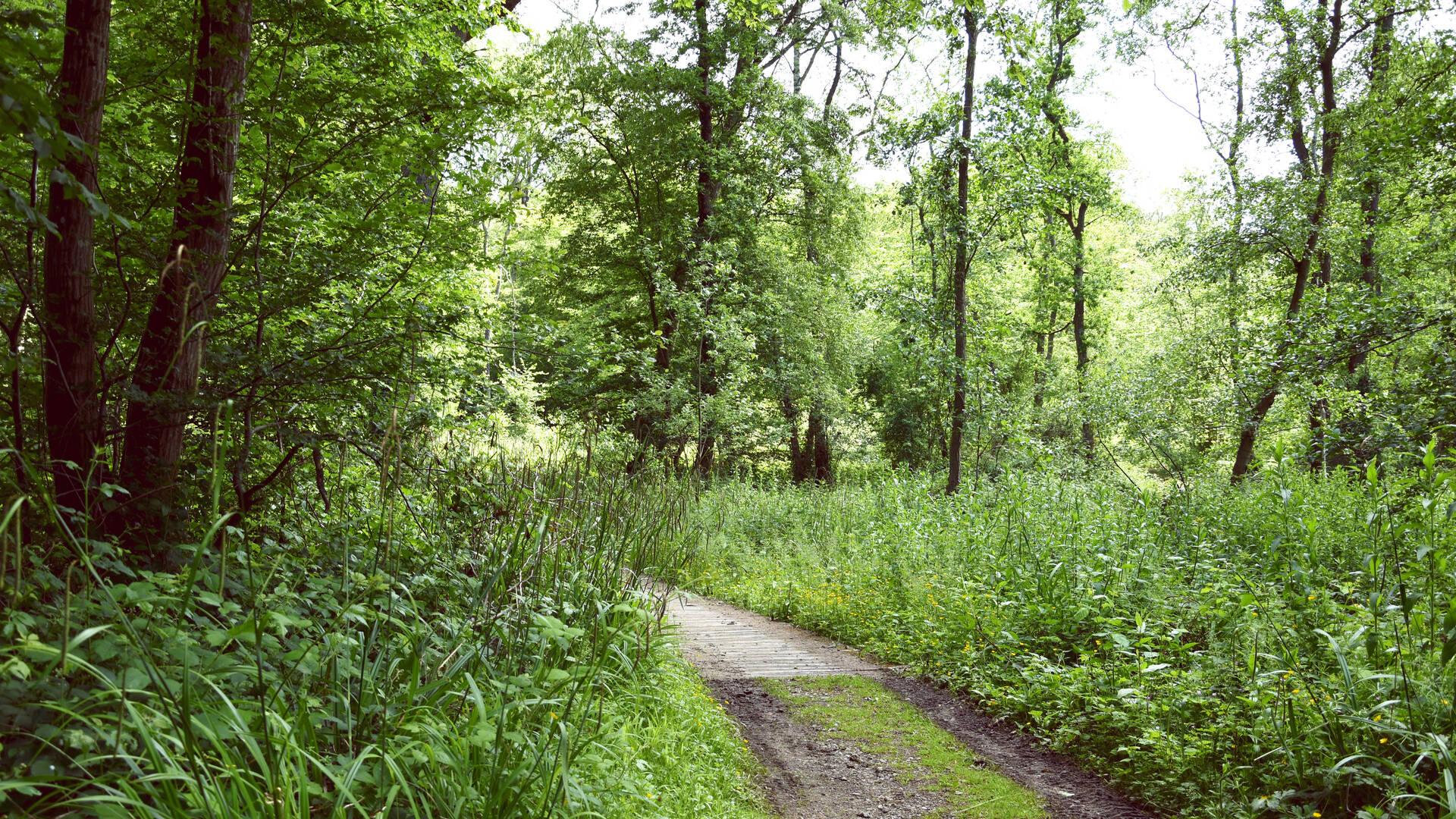 Forêt de La Capelle_©L. de Rocquigny